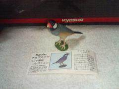 フルタ  ペット動物1  ブンチョウ                  桜文鳥