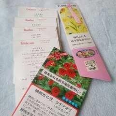 花の種6パックセット*新品*金魚草&なでしこ&矢車草たちあおい