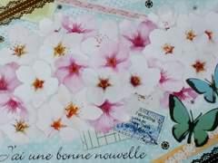 桜&蝶★ポストカード