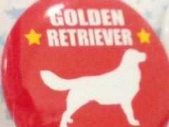 送定140円犬缶バッヂゴールデンレトリーバーイギリスdoggyBadge英国25kg30kg