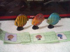 フルタ  動物コレクション2  熱帯魚の王様  ディスカス  3種