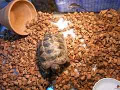 リクガメ等爬虫類床材 ヤシガラ25L ココチップ 陸亀