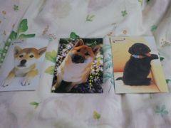 わんちゃんポストカード3枚送料込み