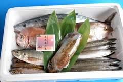 五島列島からの贈り物!鮮魚パック3000