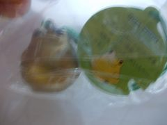 蛙鈴(ゴールド)新品
