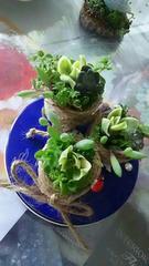 多肉植物 ミニガーデン寄せ植え