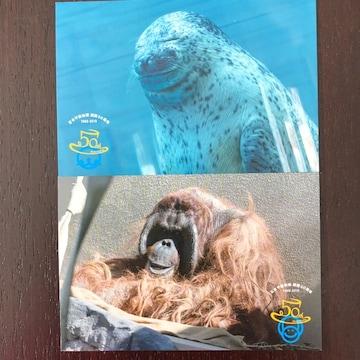 日本平動物園 ポストカード ソラ ジュン ゴマアザラシ オランウ-タン