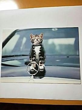 メッセージカード 猫ちゃん 誕生日 カード 2つ折り