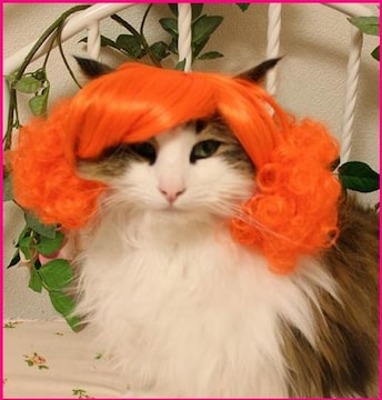 SALE【オリジナル】Wigs2you☆P-019☆犬☆猫☆ペットウィッグ