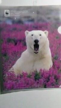 未使用クリアファイル花の中のシロクマ岩合光昭\120