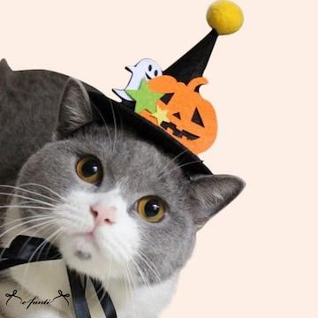 ペット用 帽子 ハロウィン カボチャ
