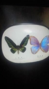 アカエリトリバネアゲハorメネラウスモルフォ蝶昆虫標本本物